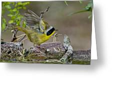 Common Yellowthroat Greeting Card