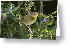Common Yellowthroat Hen Greeting Card