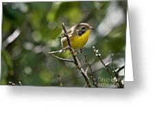 Common Yellowthroat Warbler Greeting Card