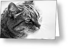 Concentrating Cat Greeting Card