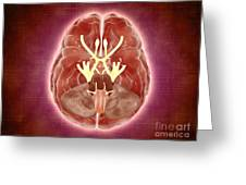 Conceptual Image Of Cranial Nerves Greeting Card