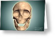 Conceptual Image Of Human Skull, Front Greeting Card by Stocktrek Images