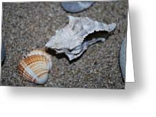 Conch 2 Greeting Card