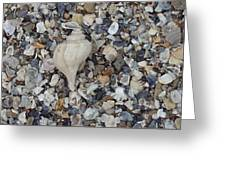 Conch Among A Sea Of Shells Greeting Card