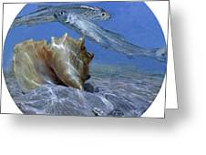 Conch And Ladyfish, 2001 Pair Greeting Card