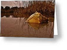 Conch Hatteras Sound 2/10 Greeting Card