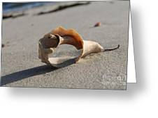 Conch On The Beach Greeting Card