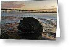 Conch Shell And Pier 2 10/17 Greeting Card