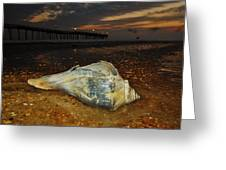 Conch Shell And Pier Predawn 2 10/18 Greeting Card