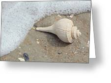 Conch Shell Vacation Greeting Card