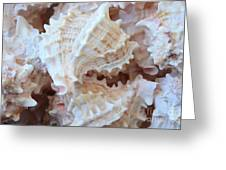 Conches Greeting Card