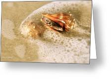 Conchs In Surf 1 Antique Greeting Card