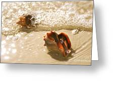 Conchs In Surf 2 Antique Greeting Card