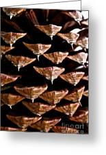 Cone Close Up Greeting Card