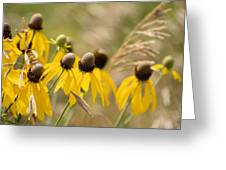 Cone Flower 8340 Greeting Card