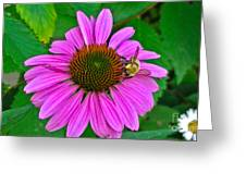Cone Flower An Bumble  Greeting Card