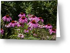 Cone Flower And Bee Greeting Card