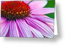 Cone Flower Blossom  Greeting Card