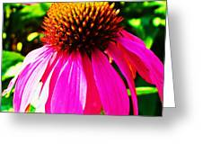 Cone Flower Greeting Card
