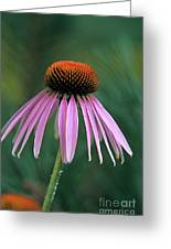 Cone Flower In Vertical Format Greeting Card