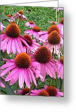 Cone Flowers 2 Greeting Card