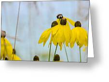 Coneflower And Bee 2  Greeting Card