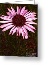 Coneflower And Dusty Miller Hdr Greeting Card
