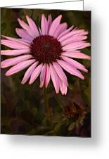 Coneflower And Dusty Miller Greeting Card