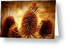 Coneflower Deadhead Greeting Card