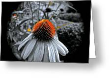 Coneflower Gold Greeting Card