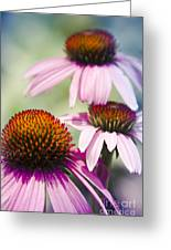 Coneflower Jewel Tones - Echinacea Greeting Card