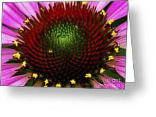 Coneflower - Little Yellow Spider Greeting Card
