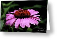 Coneflower With Bug Greeting Card