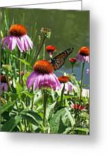 Coneflower With Butterfly Greeting Card