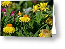 Coneflowers And Friend Greeting Card