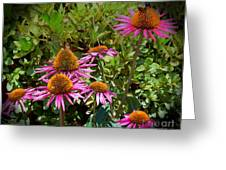 Coneflowers Greeting Card by Annette Allman