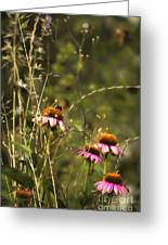 Coneflowers Weeds And Bee Greeting Card