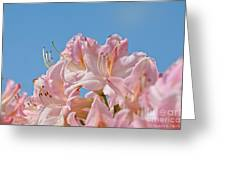 Confectioners Pink Greeting Card