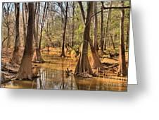 Congaree National Park Greeting Card