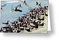 Congregating Skimmers Greeting Card