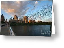 Congress Avenue Bats Greeting Card