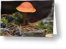 Conical Wax Cap Mushroom Greeting Card