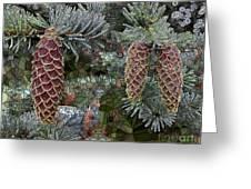 Conifer Cones Greeting Card
