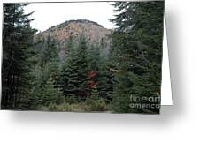 Conifer Country Greeting Card