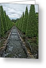 Conifer Lined Water Feature Greeting Card