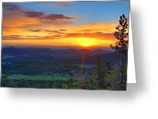 Conifer Sunrise Greeting Card