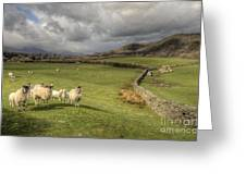 Coniston Sheep  Greeting Card