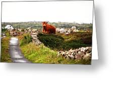 Connemara Cow Greeting Card
