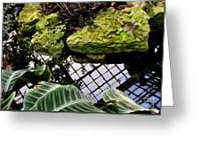 Conservatory Reflections Greeting Card
