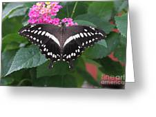 Constantines Swallowtail Greeting Card